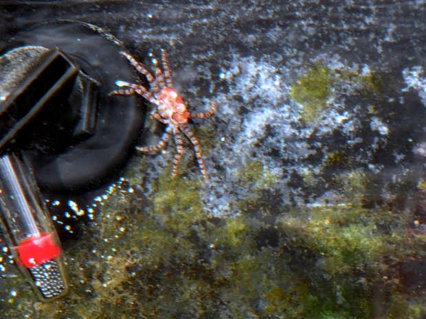 Just a crab and his return pump