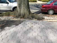 Watch out, the tree roots under the sidewalks don't make for a smooth stroll.