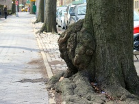 I don't know what causes this type of bulge in a tree trunk, but it looks amazing.
