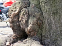 Closeup of bulge.