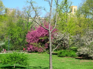 The trees of the park are the perfect mix of blossoming, half blossoms/half leaves, and just budding