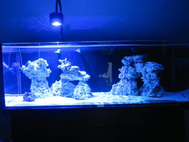 Full tank shot--now with live rock to jump start the cycle!