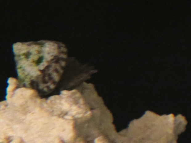 Fuzzy, but it's one snail cleaning the shell of another.