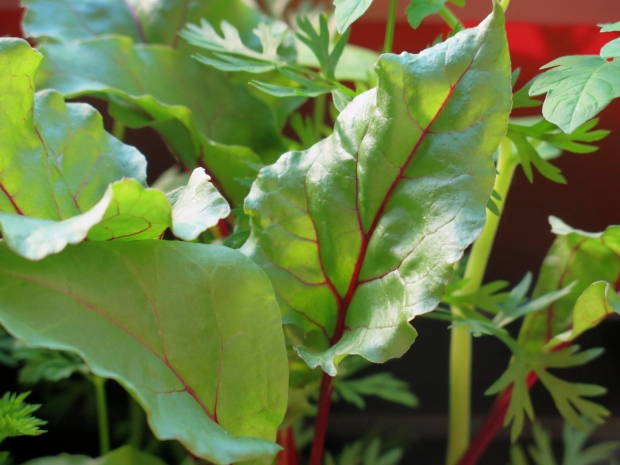 Love the leaves of the beets, so pretty.