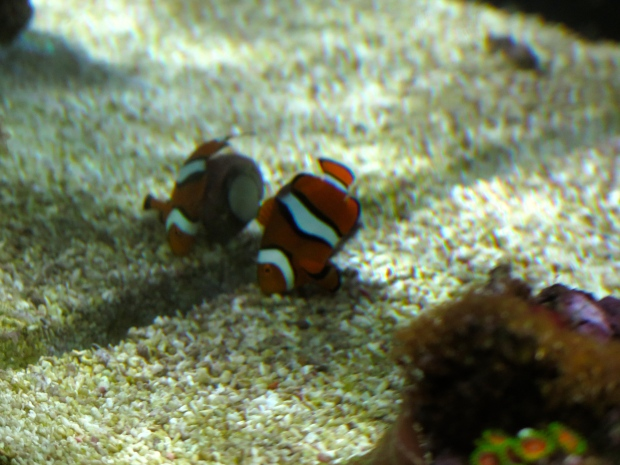 Why snuggle up with a big comfy anemone when you can rub all over a snail instead?