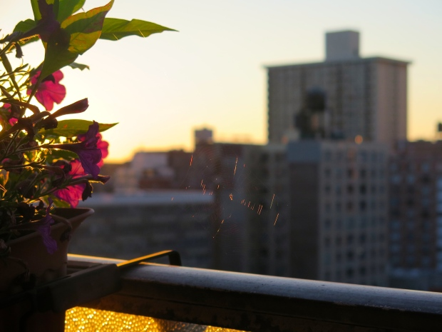 Just me, my flowers, the occasional spider to watch the sunrise.